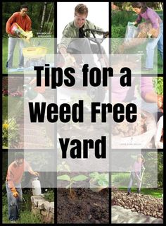 Tips for a Weed Free Yard: Use these tips to banish weeds from your yard once and for all. http://www.familyhandyman.com/landscaping/weed-killer-tips
