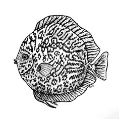 "Inktober ""Pattern"" Discus Fish by Abigail Anklam Tarantula Hawk, Kangaroo Rat, Gila Monster, Discus Fish, Inktober, The Past, Pattern, Model, Patterns"