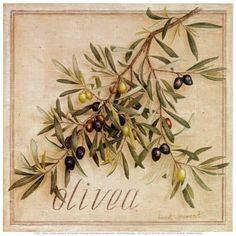 'Olives' Acrylic Painting Print on Canvas East Urban Home Botanical Art, Botanical Illustration, Painting Prints, Canvas Prints, Art Prints, Etiquette Vintage, Fruit Art, Letter Art, Cool Posters