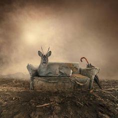 Relax Deer