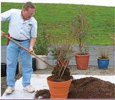 Soil mix for growing blueberries in containers: pathway bark peat moss forest-byproduct-based potting soil (azalea mix or acid plant mix) 1 handful of soil sulfur per plant Garden Yard Ideas, Backyard Patio Designs, Lawn And Garden, Garden Tips, Backyard Ideas, Planting Fruit Trees, Fruit Plants, Miniature Fruit Trees, Container Gardening Vegetables
