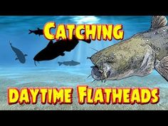 Catching Flathead catfish in the daytime in a trough on skipjack Good Catfish Bait, Catfish And Carp, Catfish Fishing, Trout Fishing Tips, Fly Fishing Tips, Fishing Rigs, Sport Fishing, Gone Fishing, Carp Fishing