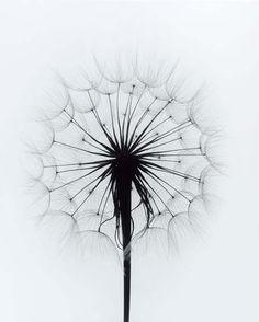 Paul Caponigro, flores y plantas en blanco y negro