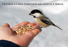 a bondade nunca vai à falência