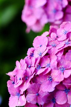 Hydrangeas #Provestra #Skinception #coupon code nicesup123 gets 25% off
