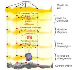 biomagnetismo - Buscar con Google
