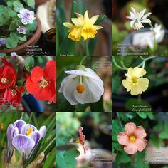 베란다의 꽃들