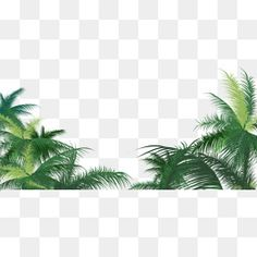 Green palm leaves PNG and Vector Photoshop Rendering, M48, Leaf Clipart, Picsart Png, Poster Photography, Green Garland, Photoshop Images, Png Photo, Leaves Vector