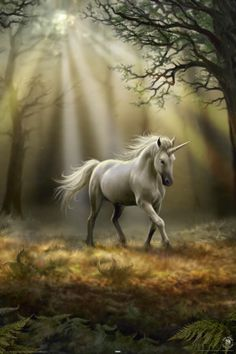 Anne Stokes - Glimpse Of A Unicorn, in the Faeries World