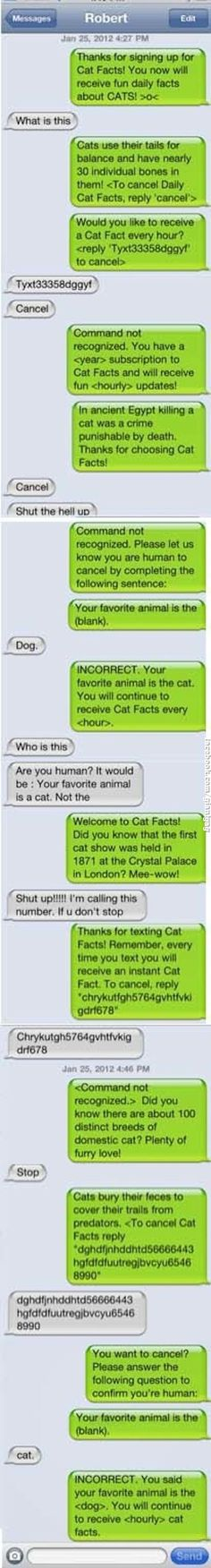 Hourly Cat Facts Subscription | Click the link to view full image and description : )