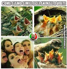 Clicca sull'immagine per visitare il sito. #Ragazze, #Sexy #Divertenti, #Donne, #Funny, #Funnypics, #Humor, #Humour, #Immagini, #Immaginidivertenti, #Italiane, #Lol, #Meme, #Memeita, #Memeitaliani, #Memes, #Memesita, #Memesitaliani, #Pics, #Ragazze, #Sesso, #Sex, #Sexy, #Spinte, #Umorismo, #Vignette, #VignetteitalianeIt, #Woman, #Women