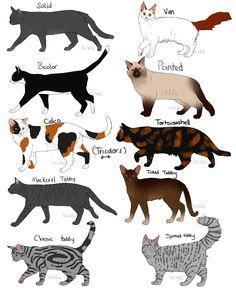 Cat Fur Patterns by Nixhil on DeviantArt Pretty Cats, Beautiful Cats, Cute Cats, Gatos Cat, Cat Anatomy, Warrior Cats Art, Cat Behavior, Cat Colors, Cat Facts