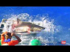 Шокирующие кадры! Нападение белой акулы на человека!