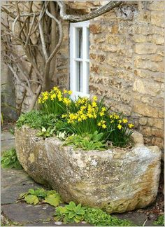 I love the stone planter and the gnarled tree.