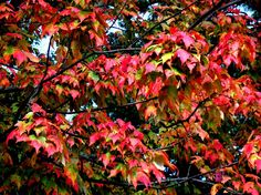 Pleasure Palate #photography #card #print #canvas #nature #autumn #Fall #foliage #tree #leaves