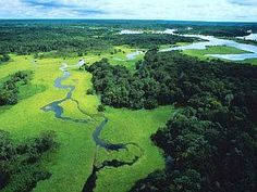 Brazil's Rio Negro Forest Reserve. Wildlife Wallpaper, Animal Wallpaper, Amazon Rainforest, Landscape Wallpaper, Stonehenge, Our Planet, Beautiful Places To Visit, Signs, Ecology