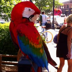 Would you believe we found this parrot outside a coffee shop near Lake Minnetonka?!