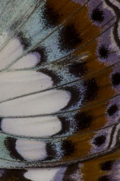 Butterfly Wing Close-up detail photograph; by Darrell Gulin Pretty Patterns, Patterns In Nature, Textures Patterns, Float Like A Butterfly, Butterfly Wings, Beautiful Bugs, Beautiful Butterflies, Art Alevel, Micro Photography