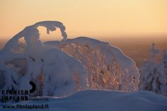 Winter in the municipality of Inari, Finnish Lapland. Photo by Courtesy of Northern Lapland Tourism ltd. #filmlapland #arcticshooting #finlandlapland