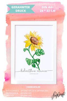 Poster mit Rahmen   Botanischer Kunstdruck   Sonnenblume
