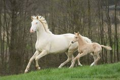 Beautiful!!  #horses #beautiful #country For more Cute n' Country visit: www.cutencountry.com and www.facebook.com/cuteandcountry