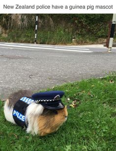 New Zealand police have a guinea pig mascot