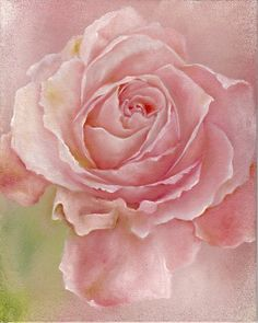Pink rose by Annette Stevenson. - Pink rose by Annette Stevenson. Flower Prints, Flower Art, Beautiful Roses, Beautiful Flowers, Watercolor Flowers, Watercolor Art, Rose Art, Arte Floral, Tole Painting