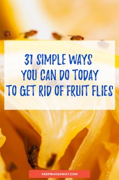 Want to learn how to get rid of fruit flies? Read this post now to discover 31 SIMPLE WAYS that YOU CAN DO TODAY to kill fruit flies effectively. House Cleaning Tips, Cleaning Hacks, Fruit Fly Larvae, Get Rid Of Flies, Fruit Flies, How To Get Rid, Simple Way, Good To Know, Gardens