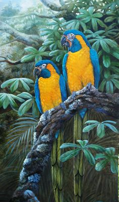 Blue-throated Macaws. A macaw endemic to a small area of north-central Bolivia.