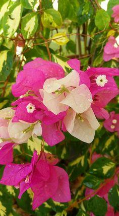 40 Ide Bunga Kertas Di 2020 Bunga Kertas Bunga Taman Indah