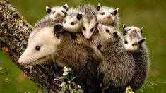 14 Of The Cutest Baby Animal Litters We Have Seen