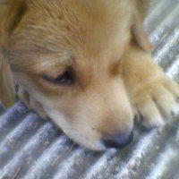 I'm good. I love you. And I'm looking for home photo Photo-0188_zpsed1b8eea.jpg