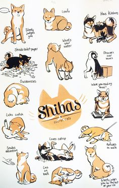 A collaboration screen print done with Nina Matsumoto. x screen print on Strathmore cream drawing paper. Comes in two color variants: orange/brown and metallic gold/brown. Sorry, the orange is now sold out! Cute Animal Drawings, Cute Drawings, Akita, Cute Puppies, Cute Dogs, Animals And Pets, Cute Animals, Dog Illustration, Shiba Inu