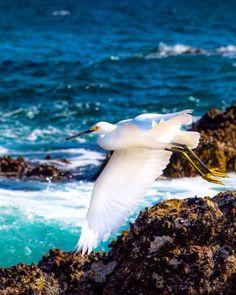 Pássaro de Los Cabos