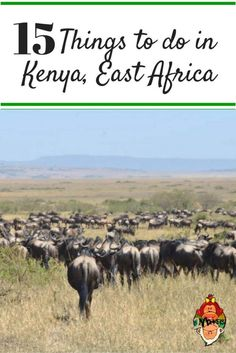 15 Things to do in Kenya East Africa  Kenya is a country in East Africa, it has an abundant wildlife, mountain highlands, Lakelands and rift valley.