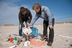 Collecting Plastic Waste on the Beach at Sylt. Photographer: Roman Pawlowski / Greenpeace
