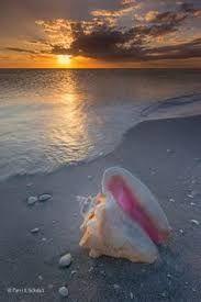 Znalezione obrazy dla zapytania seashells on the beach