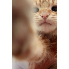 Kitty cat be like, is this how you take a selfie