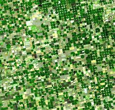 Resembling a work of modern art, variegated green crop circles cover what was once shortgrass prairie in south-western Kansas. The most common crops in this region are corn, wheat, and sorghum. Each of these crops is at a different point of development, accounting for the varying shades of green and yellow ASTER/Nasa