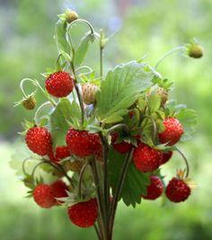 erdbeeren tischdeko fr hling dekoration pinterest strawberry wedding strawberries und. Black Bedroom Furniture Sets. Home Design Ideas