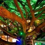 Costa Rica | Treehouses in Costa Rica | http://www.costaricajourneys.com