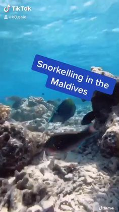 Maldives Honeymoon, Maldives Travel, Adventurous Honeymoon Destinations, Seaside Resort, Snorkelling, Nature Images, Sandy Beaches, Heaven On Earth, Adventure Time