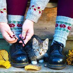 """@kammebornia shared a photo on Instagram: """"A Sunday in October. Söndag i oktober. Det är några dagar kvar på #kammeborniasocks15 och #kammeborniajarbo15 Läs mer under taggarna. Du…"""" • Oct 25, 2015 at 4:10pm UTC Socks, Cats, Animals, Instagram, October, Gatos, Animales, Animaux, Sock"""