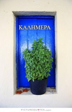 Karpathos+Island, Greece Basil Plant on the window Albania, Greek Blue, Basil Plant, Greek Design, Windows, Beautiful Islands, Greek Islands, Athens, Planter Pots
