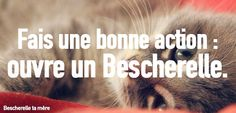 Bescherelle ta mère : apprendre le français avec des chatons