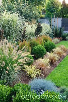 Seek this vital pic and also take a look at today critical information on Porch Landscaping Ideas House Landscape, Garden Landscape Design, Evergreen Landscape, Ornamental Grass Landscape, Drought Tolerant Landscape, Ornamental Grasses, Backyard Plants, Front Yard Landscaping, Landscaping Ideas
