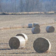 #farm field near the #homestead