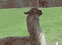 WiffleGif has the awesome gifs on the internets. llama cant deal with it nope nope nope gifs, reaction gifs, cat gifs, and so much more.