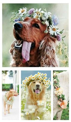 Boho Animals !!! SO CUTE!