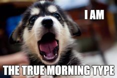 Having a bad morning? Each good morning meme in this collection can surely brighten up your day- we promise! Cute Good Morning Meme, Good Morning Beautiful Text, Funny Good Morning Messages, Bad Morning, Good Morning My Love, Happy Morning, Good Morning Sunshine, Good Morning Greeting Cards, Good Morning Greetings